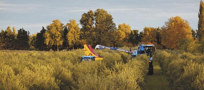 braud-9090x-olive-harvester-picking-head-06.jpg